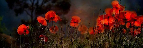 Poppy Fleurs - image 1