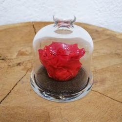 Rose éternelle sous cloche - rouge vif