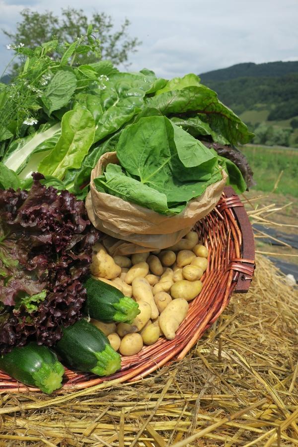 Panier de légumes d'été Bio (environ 3 kg) - image 1