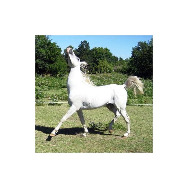 Supplément alimentaire / flore intestinale chevaux Proferm 5Kg - image 1