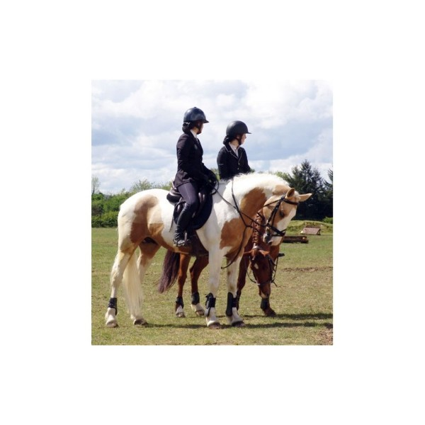Supplément alimentaire / flore intestinale chevaux Proferm 5Kg - image 3