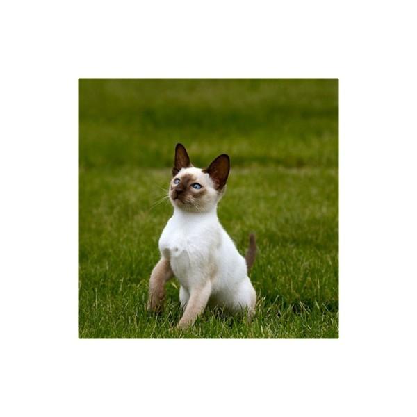 Additif alimentaire Syn-Vital pour animaux de compagnie, sac de 2Kg - image 2